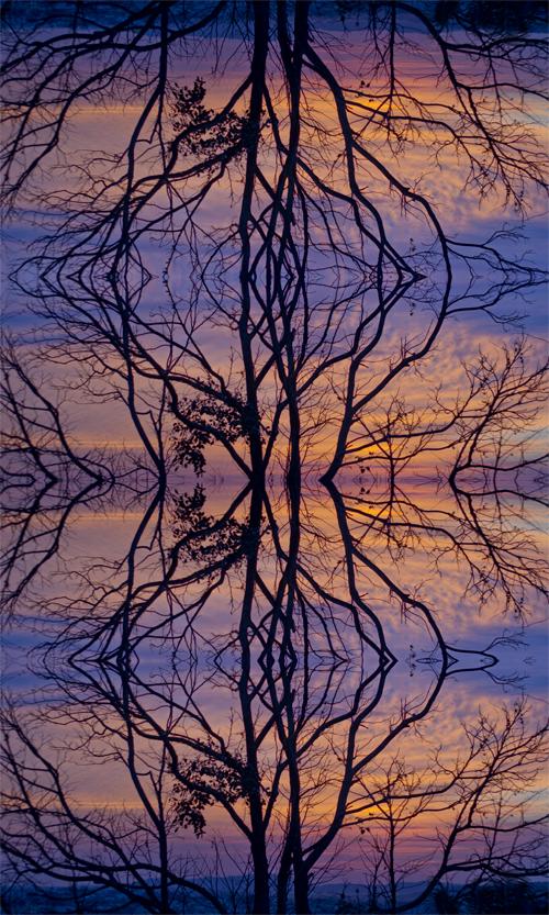 Árvore contínua   Atibaia   Jaime Scatena