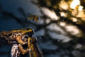 Olha a libélula Phelipe ! | Atibaia | Júnior Amojr