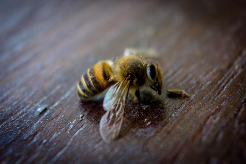 Image 7: The bee dies | Atibaia | Phelipe Aquino