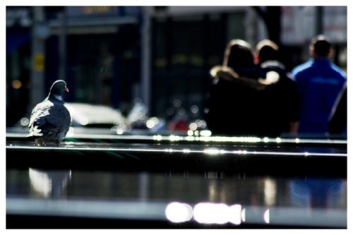 More Pigeon   London   Jaime Scatena
