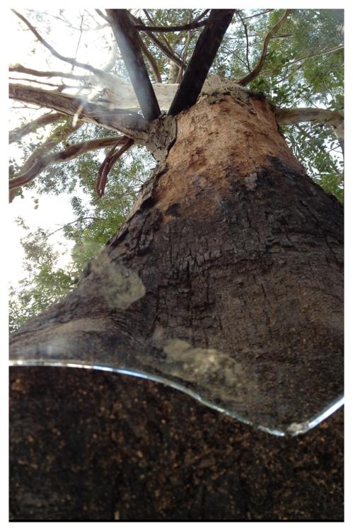 Árvore | Fazenda Serrinha | Jaime Scatena