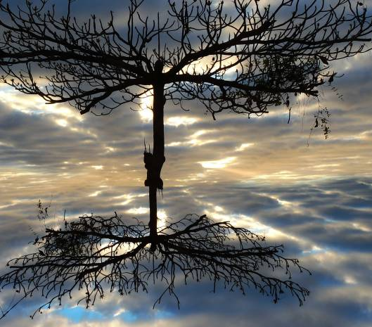 blank-mirror | webland | Gabriela Canale