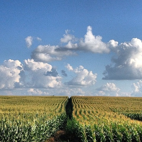 Nothing but cornfields & clouds | Freeport, IL | Jaime Scatena