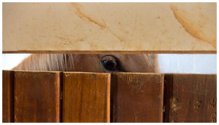 equus and me | Jacarei | R.Cambusano