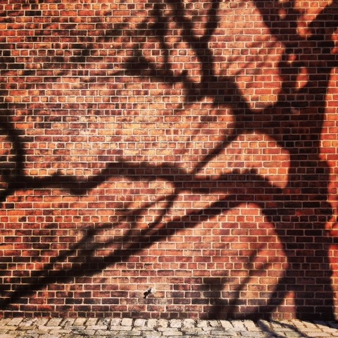 Just a branch in the wall | New York | Jaime Scatena