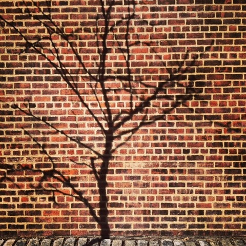 Another branch in the wall | New York | Jaime Scatena
