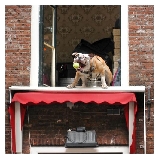 Fetching my Ball in Amsterdam | LOndon | R.CAmbusano