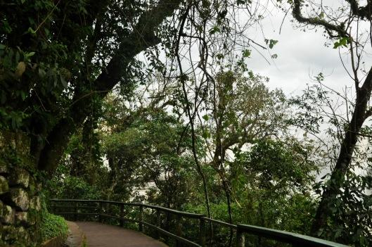 Parque nacional | Foz do Iguaçu | Gabriela Canale